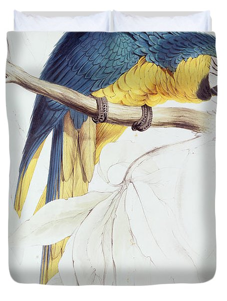 Blue And Yellow Macaw Duvet Cover by Edward Lear
