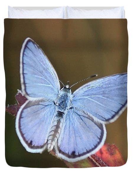 Blue Butterfly Square Duvet Cover by Carol Groenen