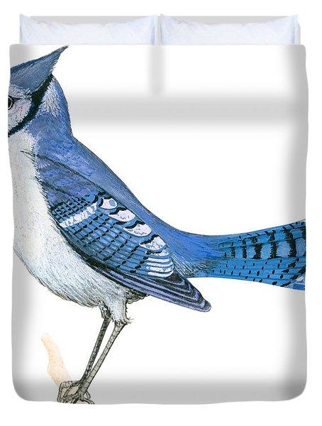 Blue Jay  Duvet Cover by Anonymous