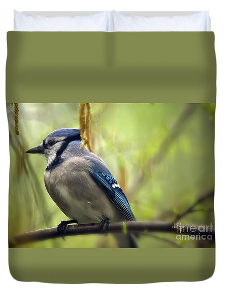 Blue Jay On A Misty Spring Day Duvet Cover by Lois Bryan