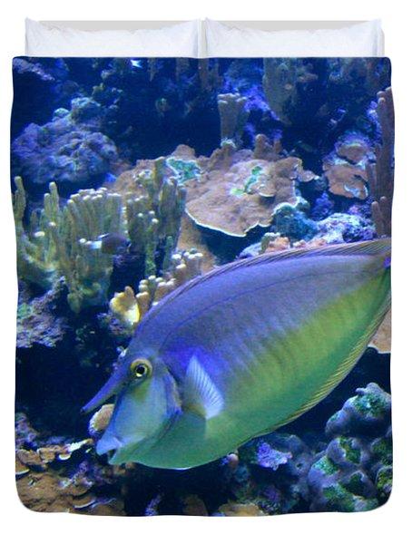 Bluespine Unicornfish Duvet Cover by Karon Melillo DeVega