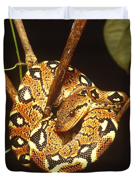 Boa Constrictor Duvet Cover by Art Wolfe