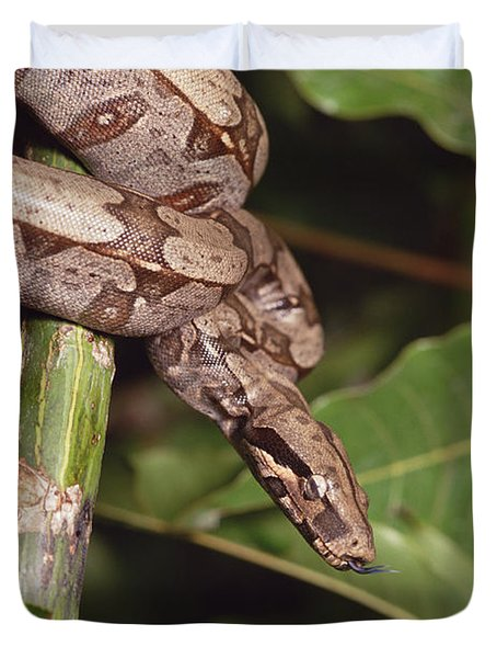 Boa Constrictor Coiled South America Duvet Cover by Gerry Ellis
