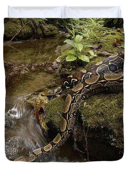 Boa Constrictor Crossing Stream Duvet Cover by Pete Oxford