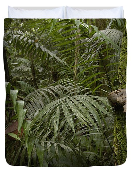 Boa Constrictor In The Rainforest Duvet Cover by Pete Oxford