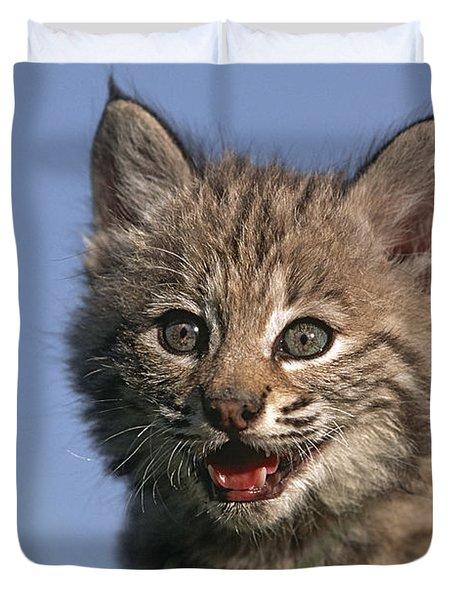 Bobcat Kitten Duvet Cover by Tim Fitzharris