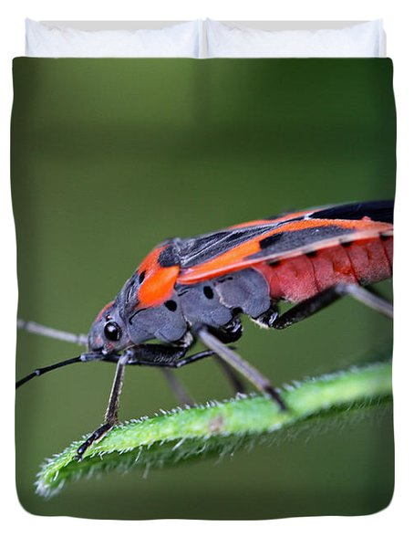 Boxelder Bug Duvet Cover by Juergen Roth