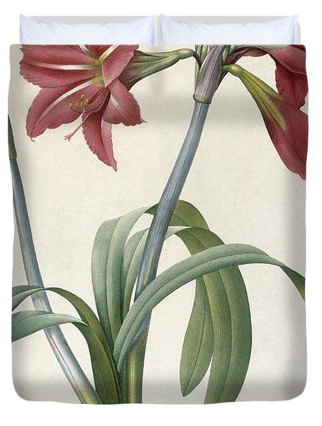 Brazilian Amaryllis Duvet Cover by Pierre Joseph Redoute