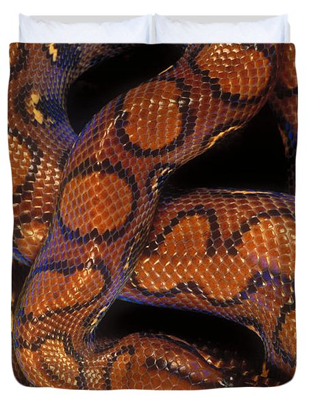 Brazilian Rainbow Boa Duvet Cover by Art Wolfe
