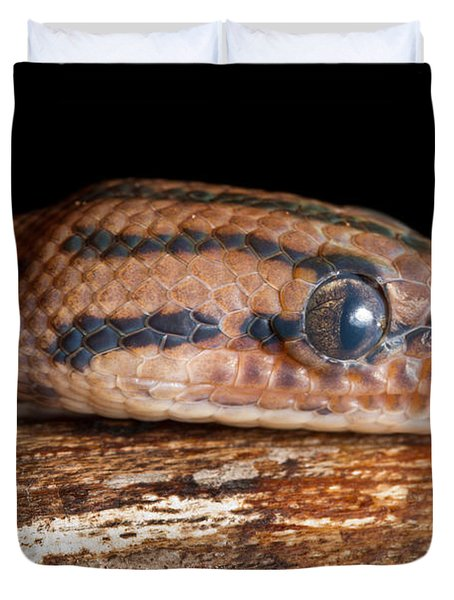 Duvet Cover featuring the photograph Brazilian Rainbow Boa Epicrates Cenchria by David Kenny