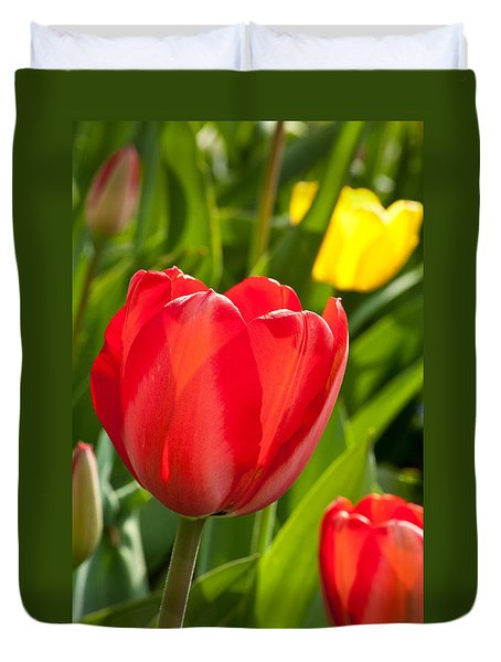 Bright Red Tulip Duvet Cover by Karol Livote