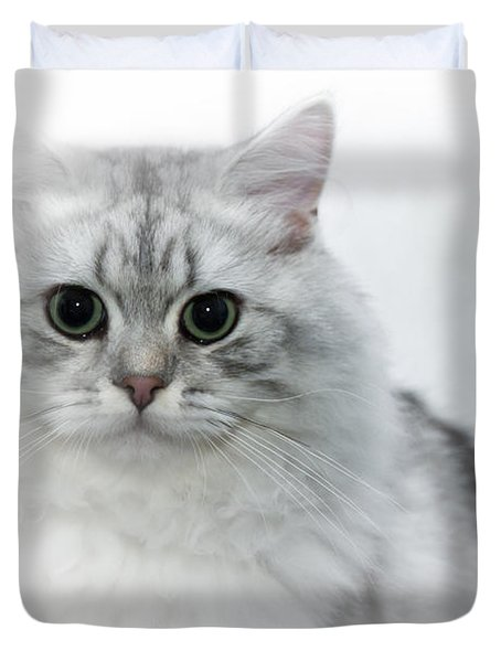 British Longhair Cat Time Goes By Duvet Cover by Melanie Viola