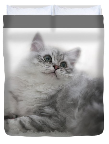 British Longhair Kitten Duvet Cover by Melanie Viola