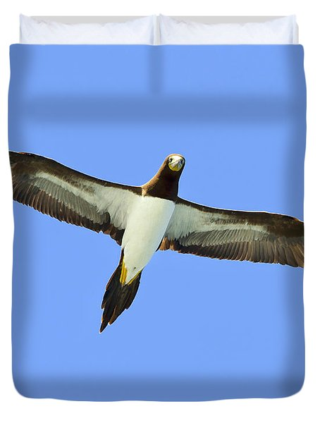 Brown Booby Duvet Cover by Tony Beck