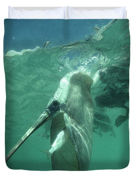 Brown Pelican Catching Mullet Duvet Cover by Tui De Roy