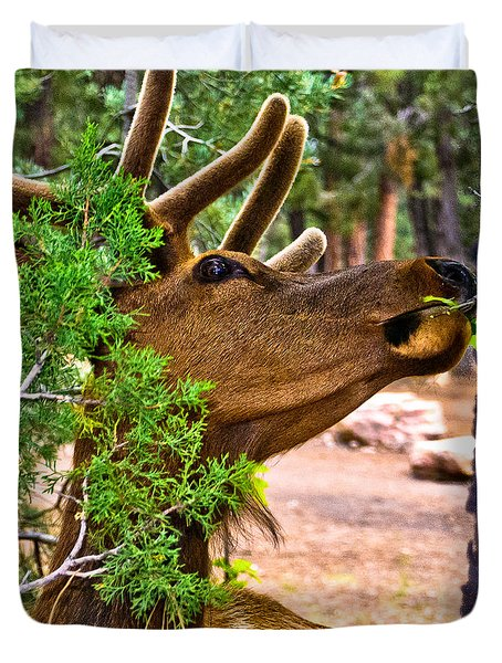 Browsing Red Deer In The Grand Canyon Duvet Cover by Bob and Nadine Johnston