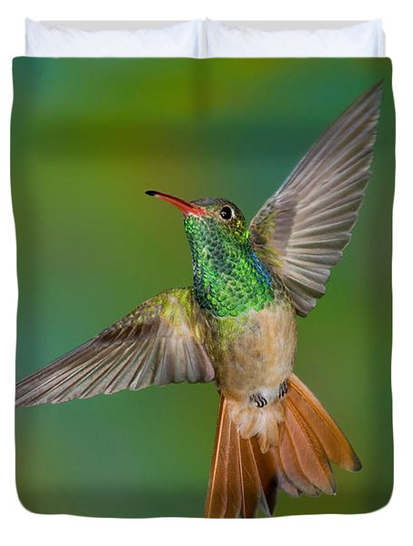 Buff-bellied Hummingbird Duvet Cover by Anthony Mercieca