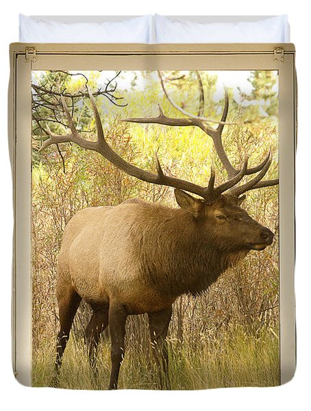 Bull Elk Window View Duvet Cover by James BO  Insogna