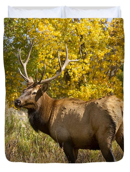 Bull Elk With Autumn Colors Duvet Cover by James BO  Insogna