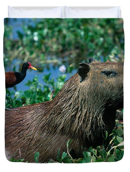 Capybara and Jacana Duvet Cover by Francois Gohier
