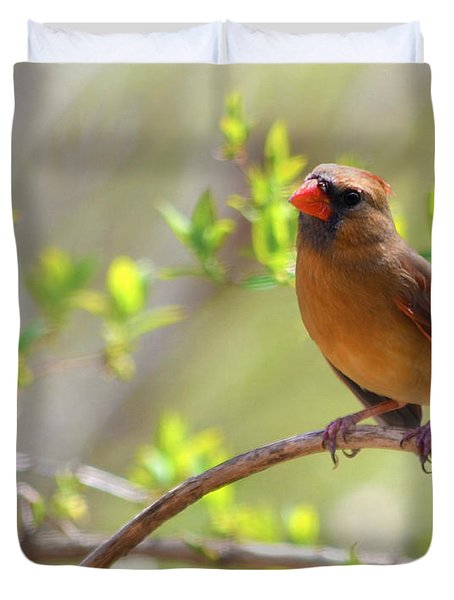 Cardinal In Spring Duvet Cover by Sandi OReilly