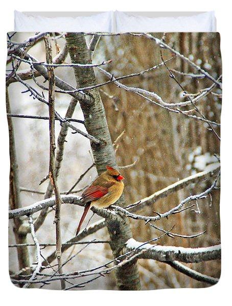 Cardinal In Winter Duvet Cover by Aimee L Maher Photography and Art Visit ALMGallerydotcom