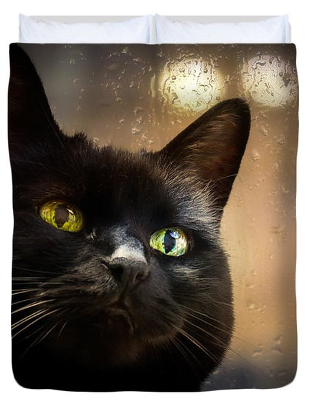 Cat in the window Duvet Cover by Bob Orsillo