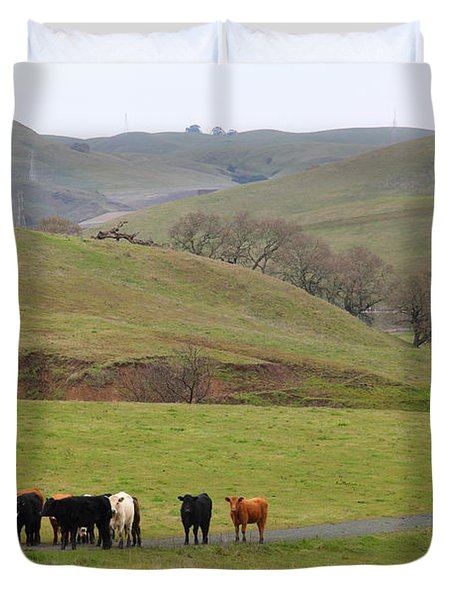 Cattles at Fernandez Ranch California - 5D21062 Duvet Cover by Wingsdomain Art and Photography