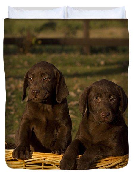Chocolate Labrador Retriever Pups Duvet Cover by Linda Freshwaters Arndt