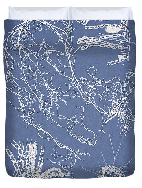 Cladosiphon decipiens Duvet Cover by Aged Pixel