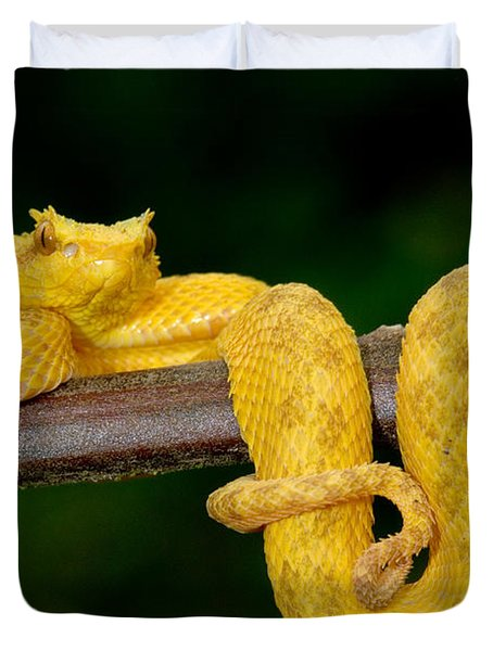 Close-up Of An Eyelash Viper Duvet Cover by Panoramic Images