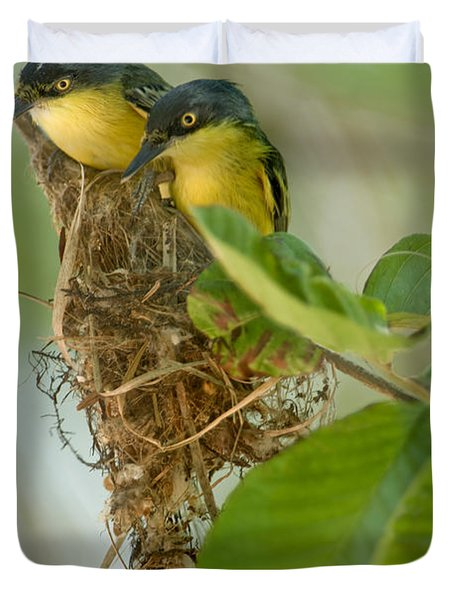 Close-up Of Two Common Tody-flycatchers Duvet Cover by Panoramic Images