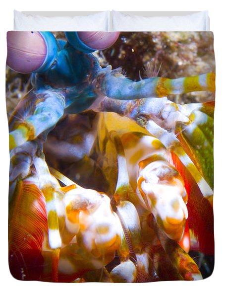 Close-up View Of A Mantis Shrimp Duvet Cover by Steve Jones