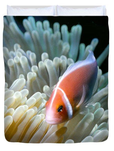 Clownfish 9 Duvet Cover by Dawn Eshelman