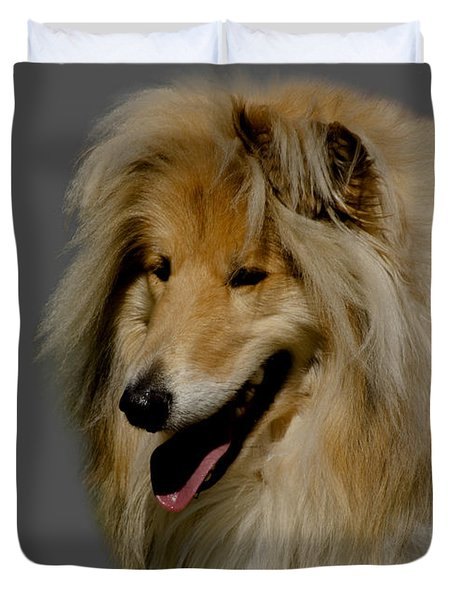 Collie dog Duvet Cover by Linsey Williams