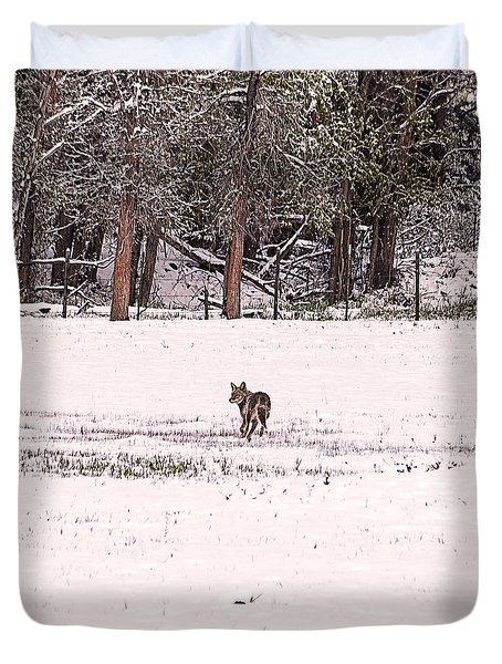Colorado Coyote Play Duvet Cover by Janice Rae Pariza