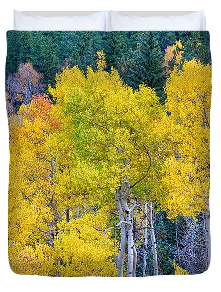 Colorful Forest Duvet Cover by James BO  Insogna