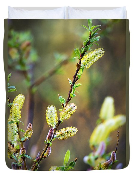 Colorful Spring Pussy Willows Duvet Cover by Christina Rollo