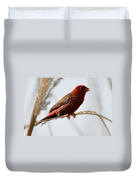 Colour Me Red Duvet Cover by Fotosas Photography