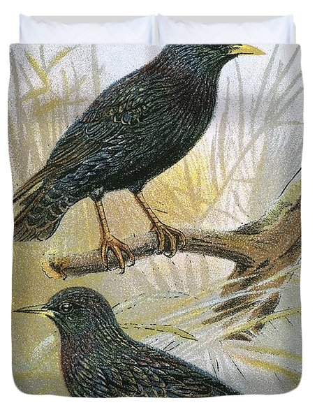 Common Starling Top And Intermediate Starling Bottom Duvet Cover by English School
