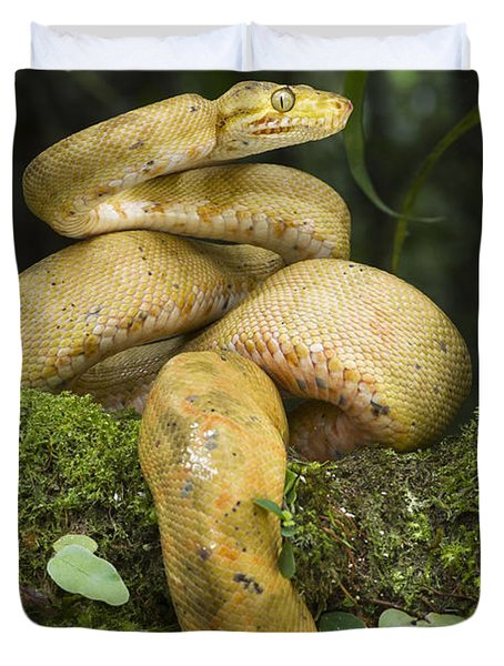 Common Tree Boa -yellow Morph Duvet Cover by Pete Oxford