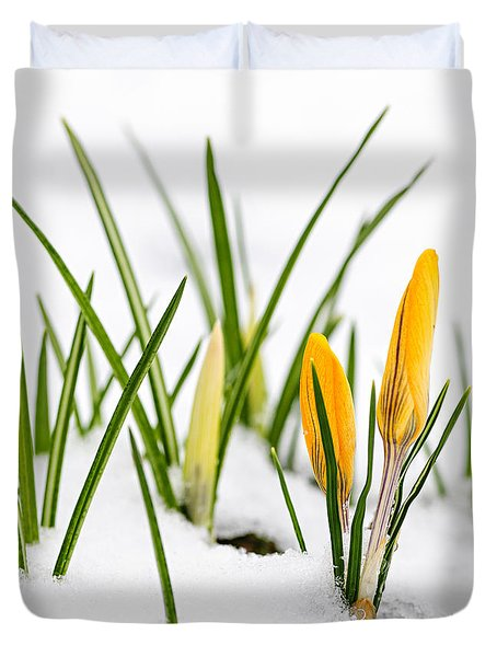 Crocuses in snow Duvet Cover by Elena Elisseeva