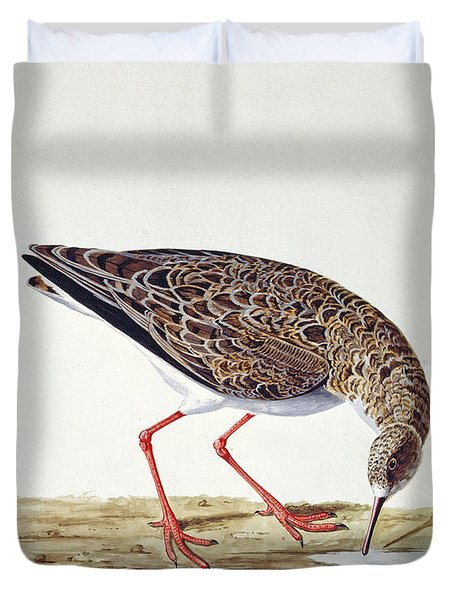 Curlew Sandpiper Duvet Cover by Charles Collins