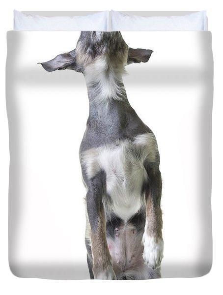 Dancing Dog Duvet Cover by Edward Fielding
