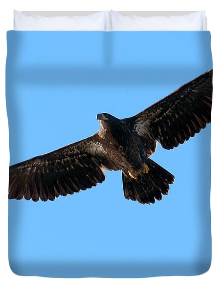 Eagle Wings Duvet Cover by Sharon  Talson