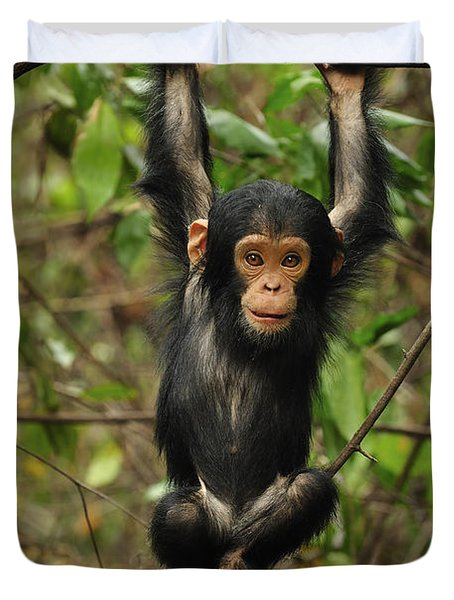 Eastern Chimpanzee Baby Hanging Duvet Cover by Thomas Marent