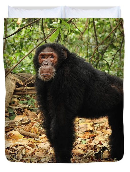 Eastern Chimpanzee Gombe Stream Np Duvet Cover by Thomas Marent