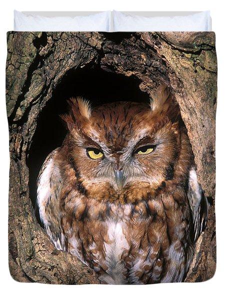 Eastern Screech Owl - FS000810 Duvet Cover by Daniel Dempster