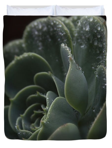 Echeveria Elegans X Lola - Crassulaceae Duvet Cover by Sharon Mau
