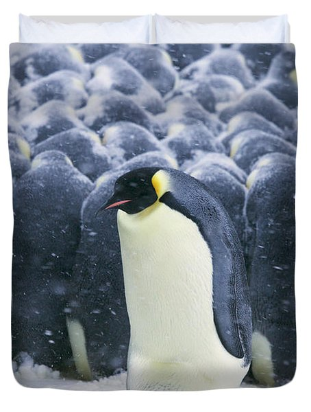 Emperor Penguin Trying To Get Duvet Cover by Frederique Olivier
